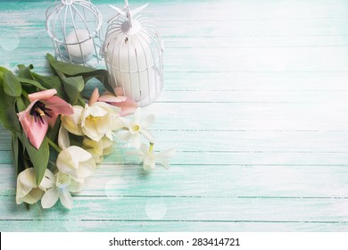 Fresh  spring white and pink  tulips and narcissus flowers, candles in decorative bird cages in ray of light  on turquoise  painted wooden background. Selective focus. Place for text.
