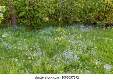 Fresh springtime field with blue forget-me-nots and yellow cowslips