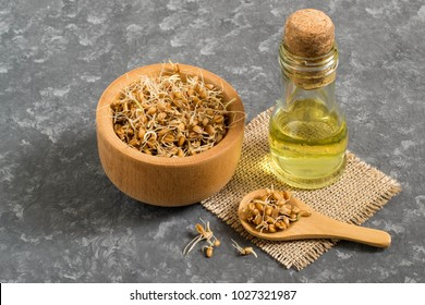 Fresh sprouted wheat seeds in bowl and spoon, wheat germ oil in bottle. Source of vitamins and micronutrients, has general strengthening, immunostimulating, antibacterial, antioxidant properties