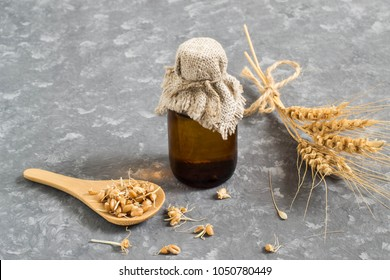 Fresh sprouted wheat seeds in spoon, ears and bottle of wheat germ oil for cosmetic purposes. Source of vitamins and micronutrients, has anti-aging, antibacterial and antioxidant properties