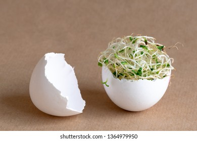 Fresh sprouts making a nest inside a white egg shell. Easter, revival and spring concept.
