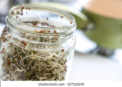 Fresh sprouts seeds isolated on glass jar