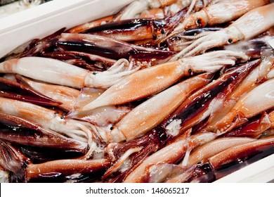 fresh squid 1