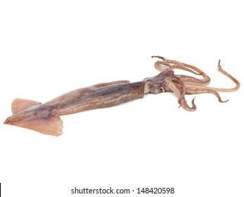 Fresh squid (calamare) on a white background
