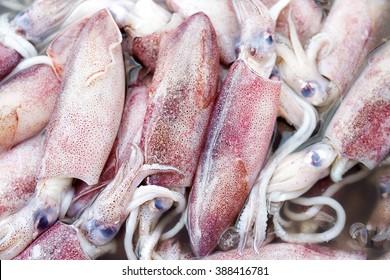 Fresh Squid in market , Bigfin reef squid, Soft cuttlefish , Sepioteuthis lessoniana , Teuthida ,
