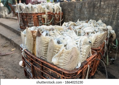 Fresh squid on display at seafood market in Fort Kochi, India. Baskets with big calamaris at daily fish market in Cochin.
