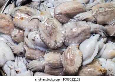 Fresh squid sold in the market. Whiteraw squid seafood or fresh squid display for sale at wet market for cooking in seafood or other menu.