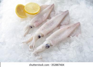 Fresh Squid whole round