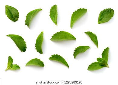 fresh stevia leaves isolated on white background, top view