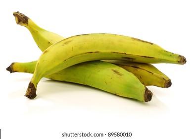 fresh still unripe plantain (baking) bananas on a white background