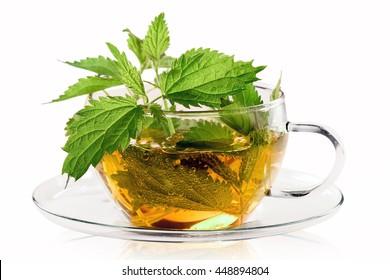 Fresh stinging nettle tea