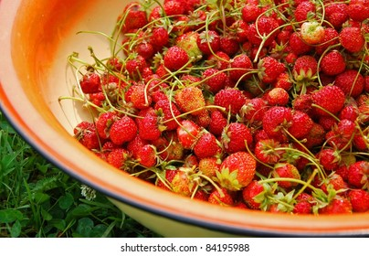 Fresh strawberries in metal basin on the grass
