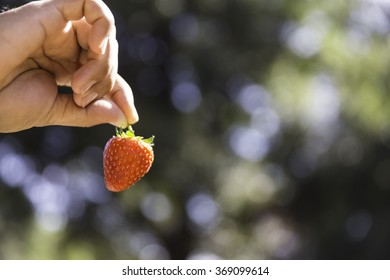 Fresh strawberry in hand on bokeh background