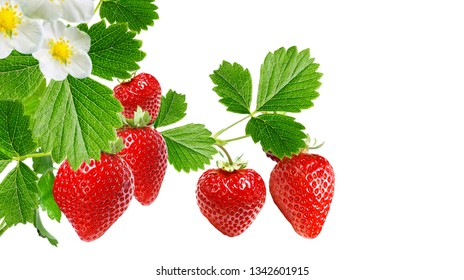 fresh strawberry on white background