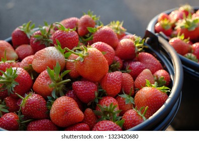 fresh strawberry in tray.