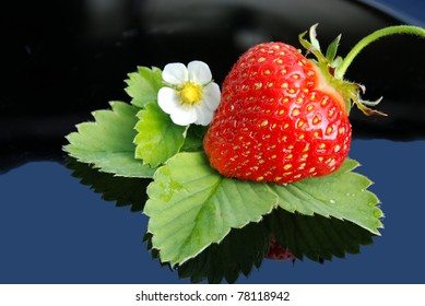 Fresh strawberry  and white flower on blue background