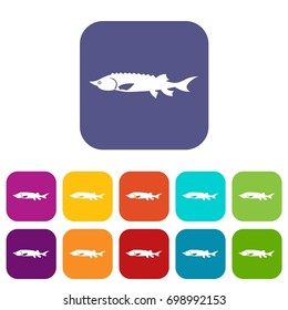 Fresh sturgeon fish icons set  illustration in flat style in colors red, blue, green, and other