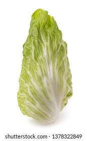 Fresh sugarloaf lettuce isolated on white background