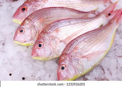 Fresh Sultan Ibrahim Fishe