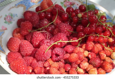 Fresh summer berries on plate in the garden