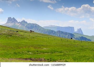 Fresh summer dolomites, Italy