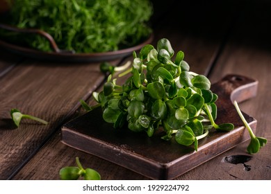 Fresh sunflower microgreens on a wooden board, close up