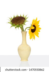 Fresh sunflower seed head and separate flower, in crackle glaze old vase, white background.