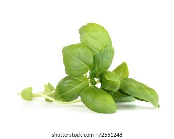 Fresh sweet basil leaves isolated