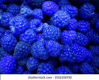 Fresh and sweet blue raspberries texture background. Raspberry fruit pile background. Selection of freshly picked ripe organic raspberries background. Delicious first class raspberries heap background