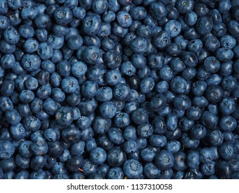 Fresh sweet blueberry background. Vaccinium corymbosum, the northern highbush blueberry. Close-up swamp huckleberry blue-black berry texture, surface