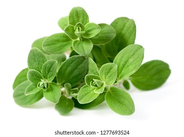 fresh sweet marjoram herb isolated on the white background