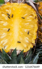 Fresh sweet pineapple with many bees for sale in local  market.