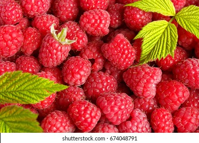 Fresh and sweet raspberries background. Selective focus.