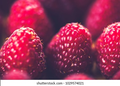 Fresh and sweet raspberries. A healthy option. Digestion, detox, and disease prevention. The fiber and water content in raspberries help to prevent constipation and maintain a healthy digestive tract.