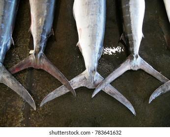 Fresh swordfish wait for auction in fish market Chiba Japan