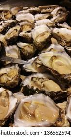 fresh Sydney rock oyster
