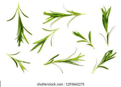 fresh tarragon herb isolated on the white background, top view