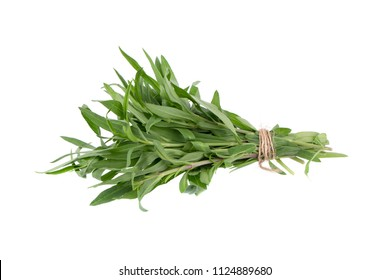 Fresh tarragon herbs, Tarragon herbs close up isolated on white background.