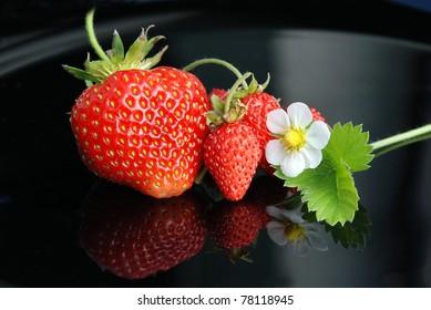 Fresh and tasty strawberries white flower on a black background