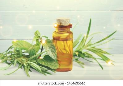 Fresh tea tree and essential oil