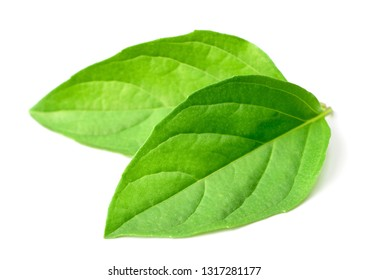 fresh Thai Basil leaves isolated on white background