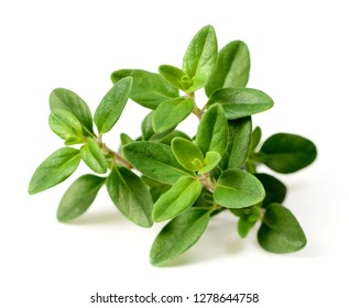 fresh thyme herb isolated on the white background