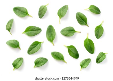 fresh thyme leaves isolated on the white background