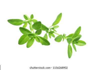 Fresh thyme spice isolated on white background