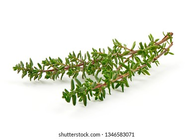 Fresh thyme sprigs, spice, close-up, isolated on white background.