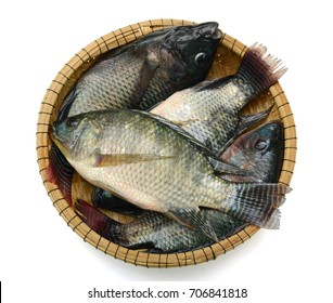 Fresh Tilapia fish in basket isolated on white background
