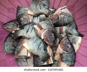Fresh Tilapia in floating basket before to be a food ,Tilapia, fresh fish, fresh food in Thailand