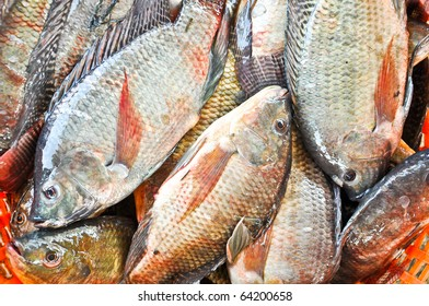 Fresh Tilapia or Oreochromis locally in Thai is Nil (Black) Fish