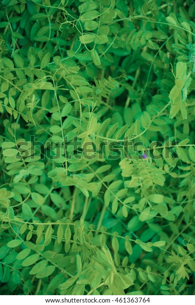 Fresh tiny green leaves wall texture background