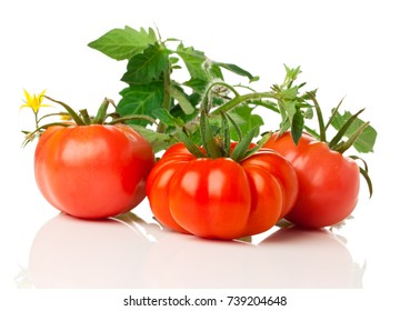 fresh tomatoes with bush on white background